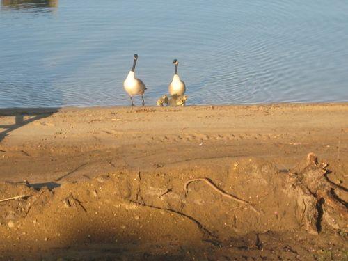 Lake - may 029
